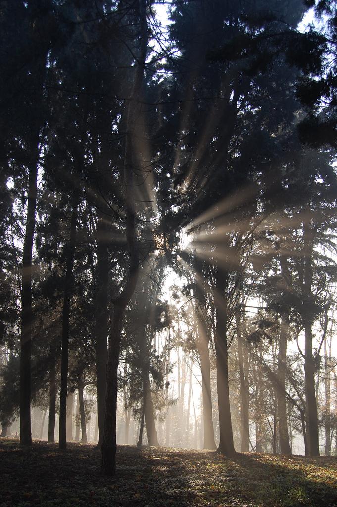 alberi e nebbia al parco del risorgimento