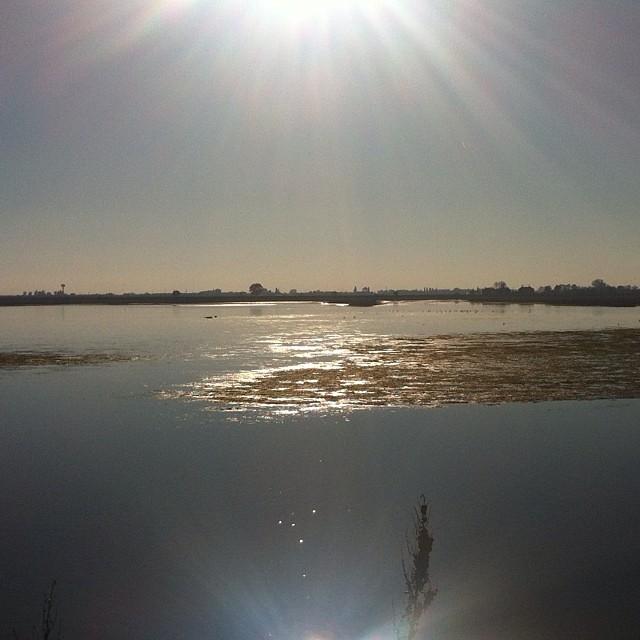 laguna veneziana con il sole
